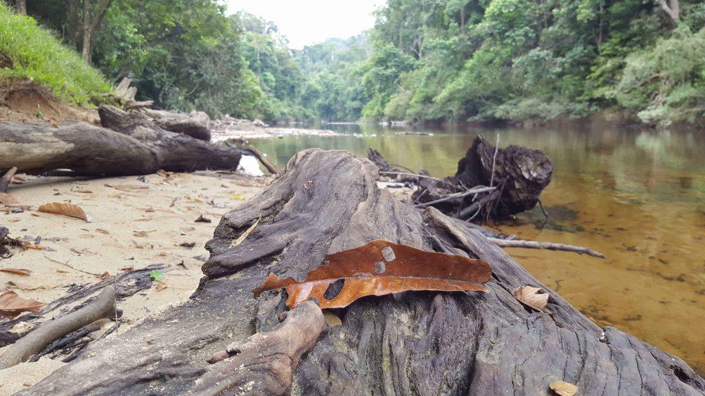 Lubuk Simpon beach - Senderismo en Taman Negara