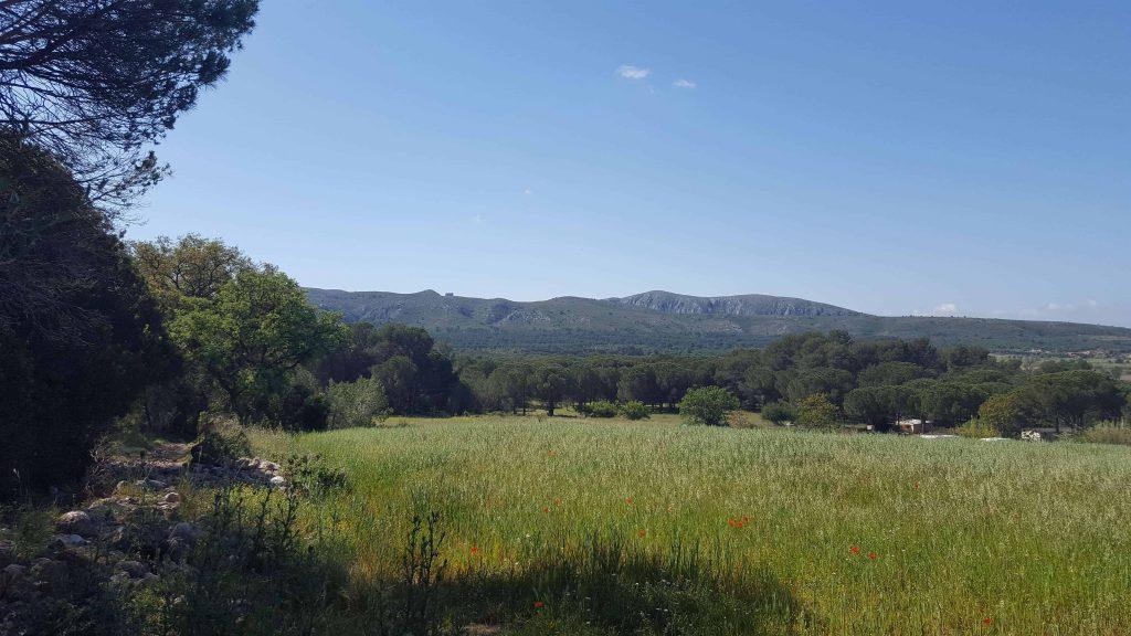 Castell del Montgrí - L'Escala to Torroella de Montgrí