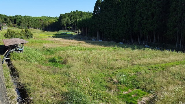 Campos de arroz abandonados