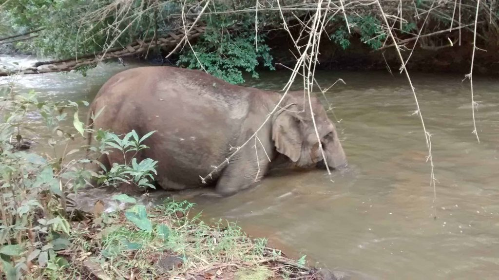 Elephant enjoys a shower in the river