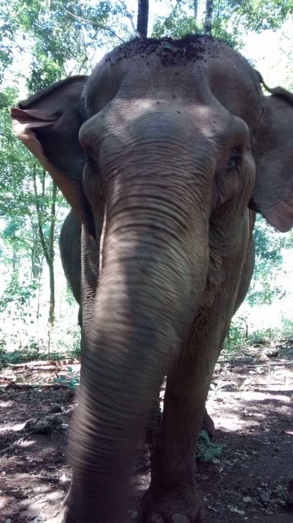 Princess is probably the most lovely elephant Mondulkiri
