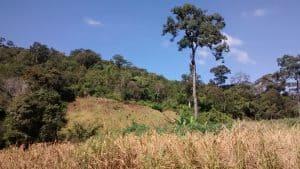 Rice fields at the Mondulkiri province