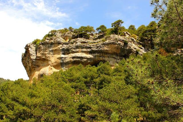 Pino rodeno - Sierras de Cazorla