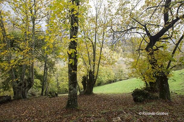 O Courel forests spain lugo