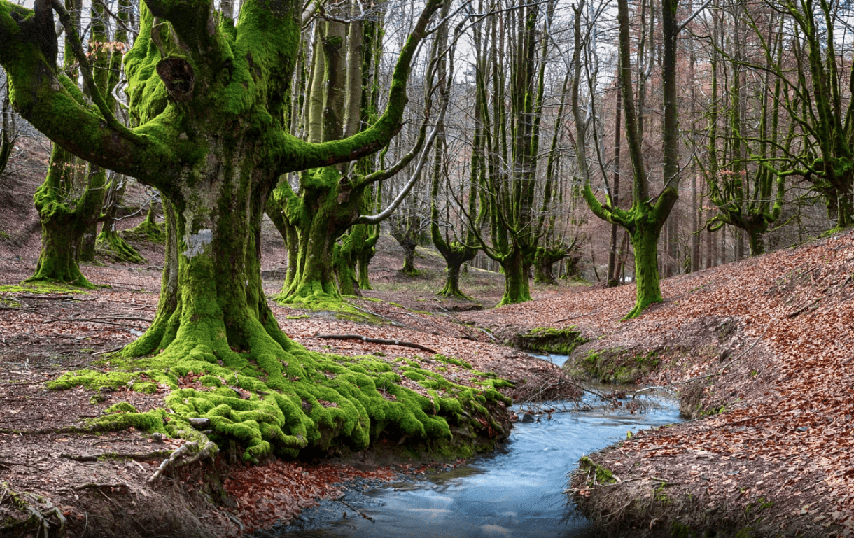 Gorbea Natural Park spain