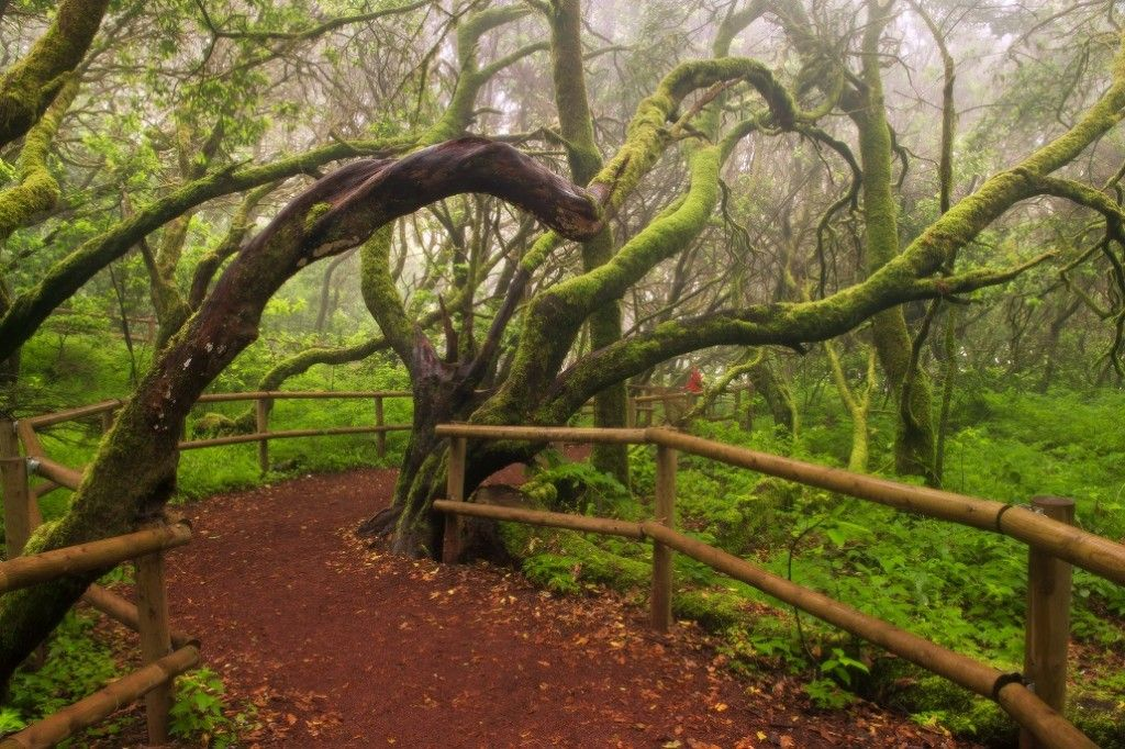 National Park of Garajonay Canary Islands