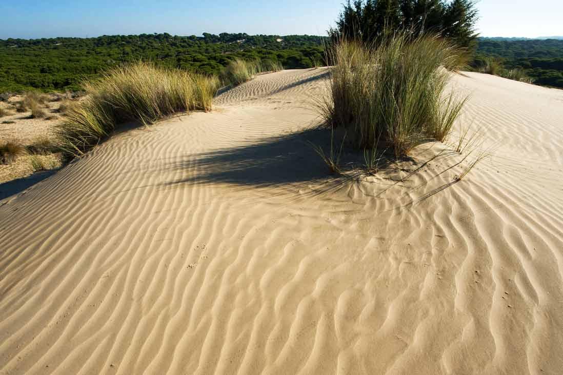 Dunas del Parque nacional Doñana, senderismo parque nacionales de españa