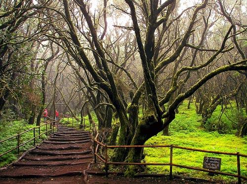 Garajonay Spanish National Park