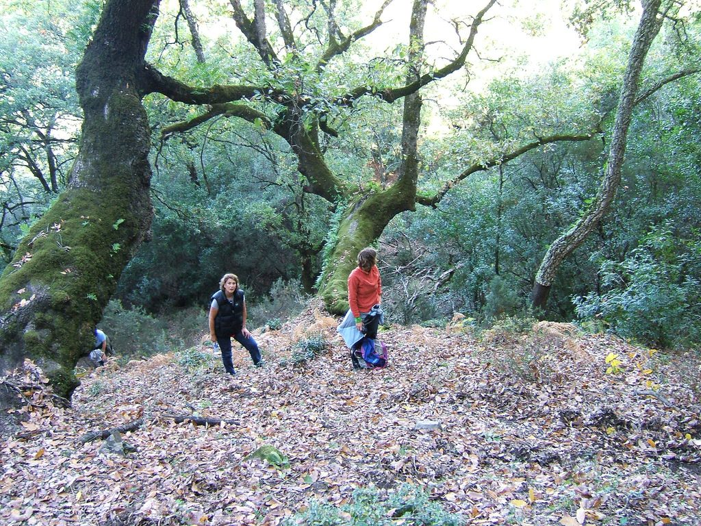 Los Alcornocales Natural Park (Andalusia)