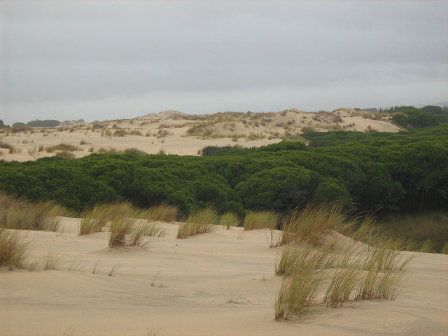 Parque Natural Doñana