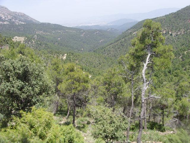 Parque regional de Sierra Espuña, Murcia