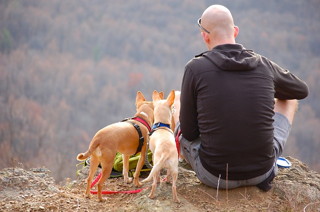 Senderismo con perros