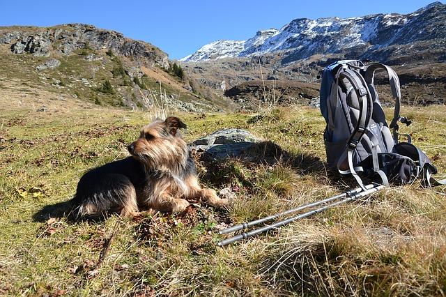 rutas de senderismo con perro