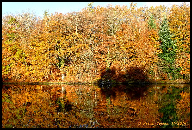 Creuse forests in Autumn