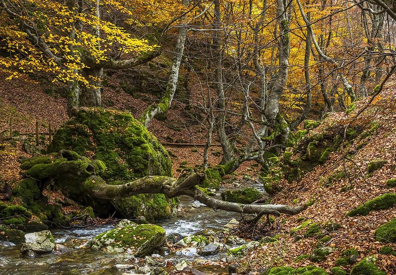 forest Faedo de Ciñera