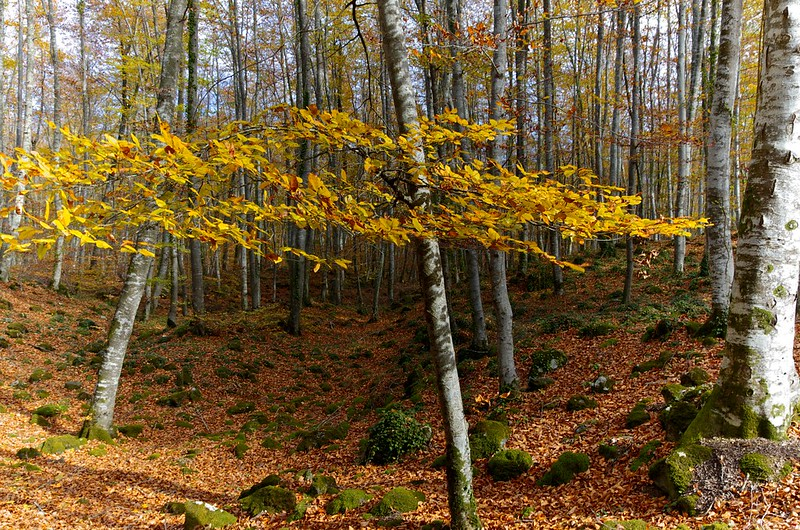 Forest for hiking in autumn of Spain