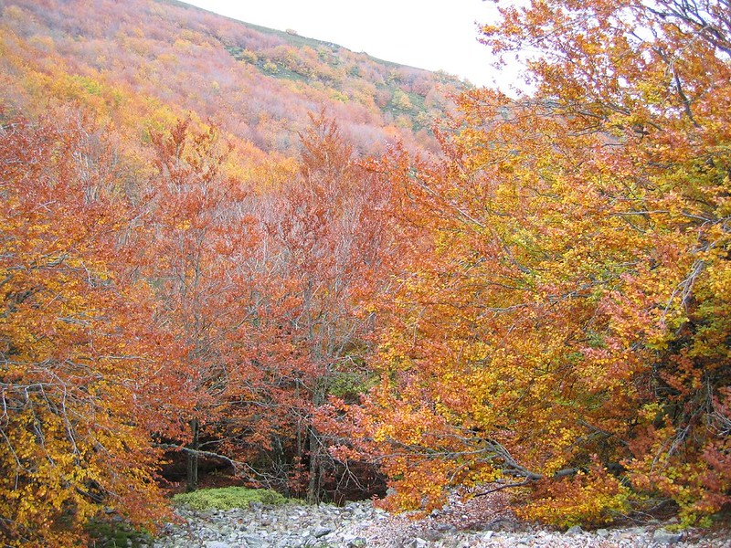 hiking trails in autumn forests a wonder of Spain