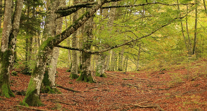 8 Hiking trails in autumn forests in Spain