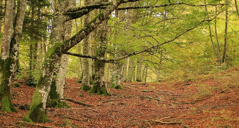 Rutas senderismo bosques españa