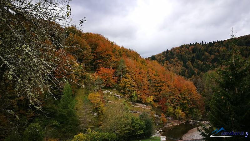 bosque Selva de Irati navarra