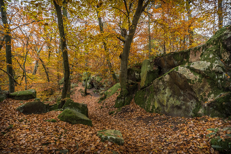 hiking trails  Fontainebleau in autumn