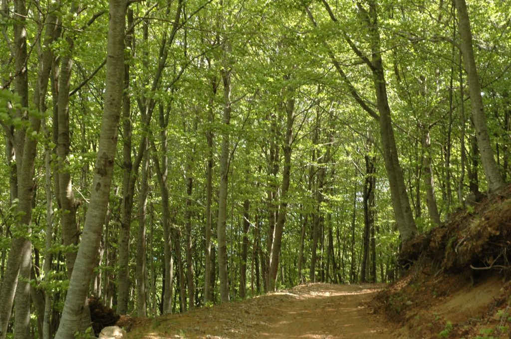Forest in Arbucies Montseny
